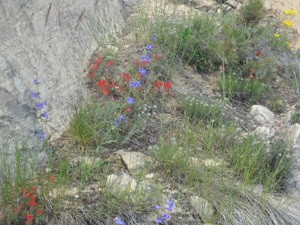 A selection of wildflowers along Lower Liberty Cap Trail